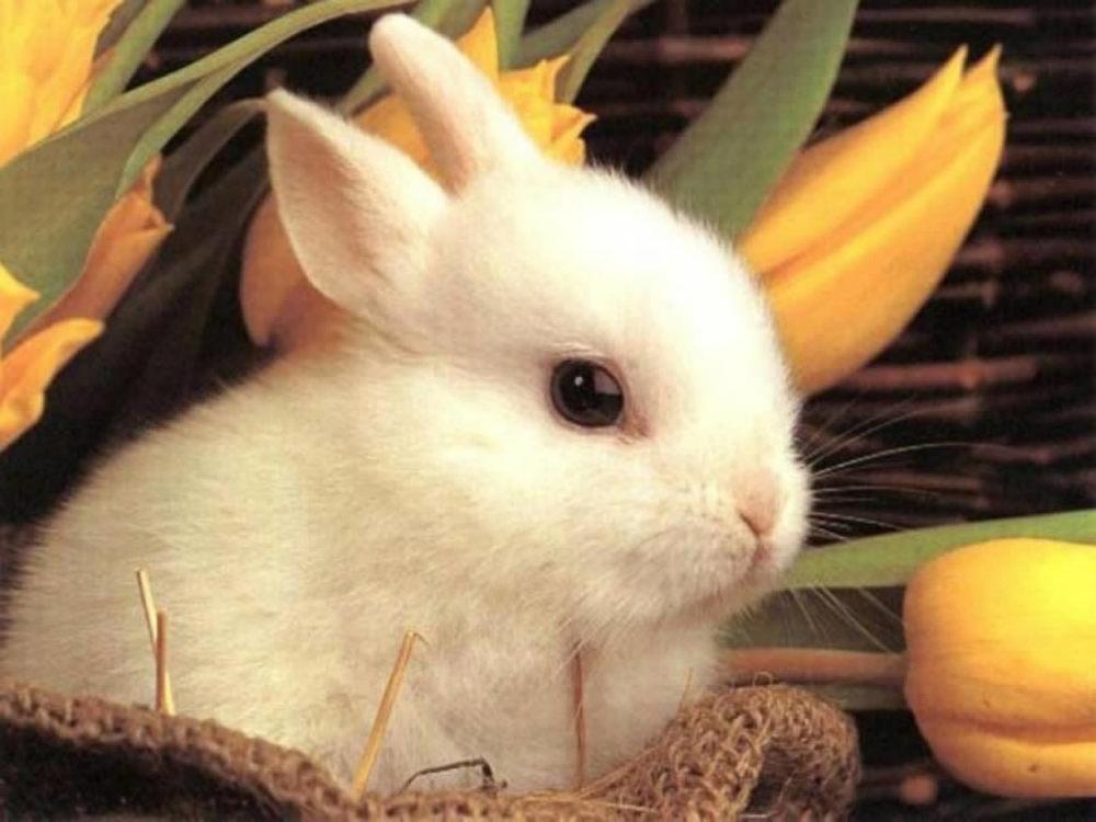 babt-rabbit-w-paper-easter-846339_1024_768