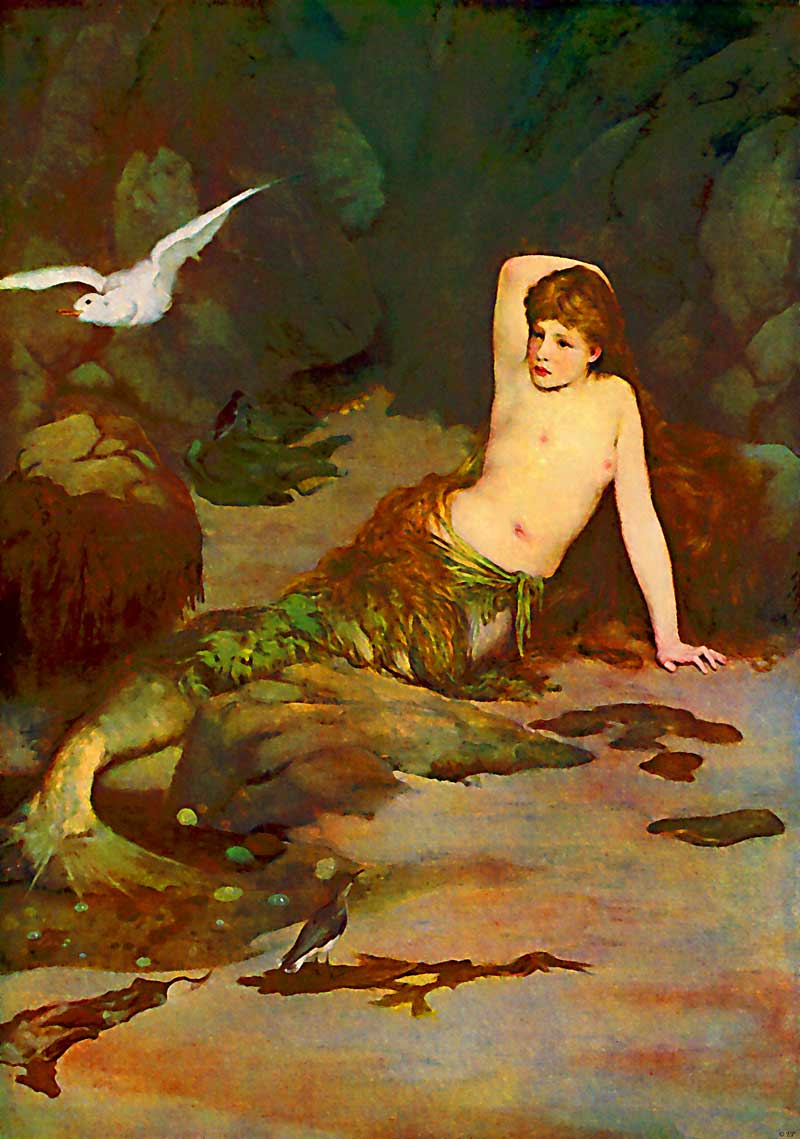 mermaid_seagull-enhanced-800.jpg