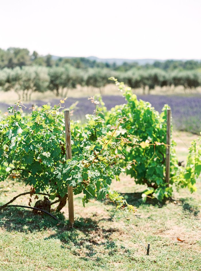 mas-de-la-rose-provence-france-destination-film-wedding-photographer-4528_02.jpg