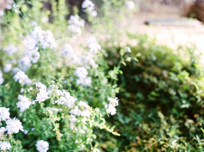 mas-de-la-rose-provence-france-destination-film-wedding-photographer-4537_10.jpg
