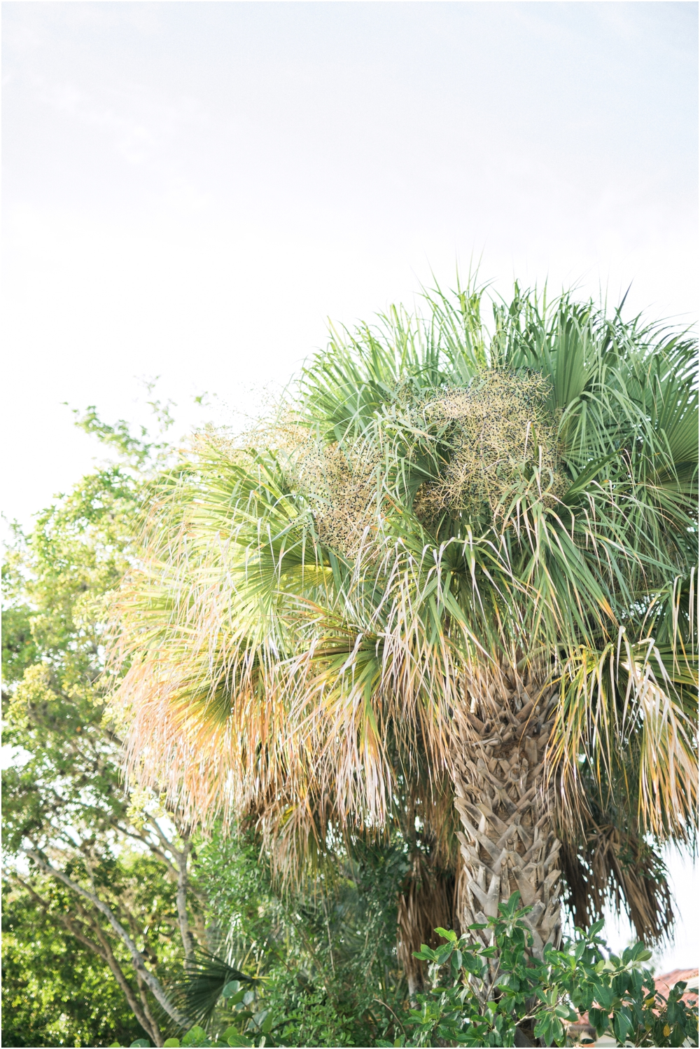 Naples_Wedding_Photographer_Florida_Engagement_Session_1206.jpg