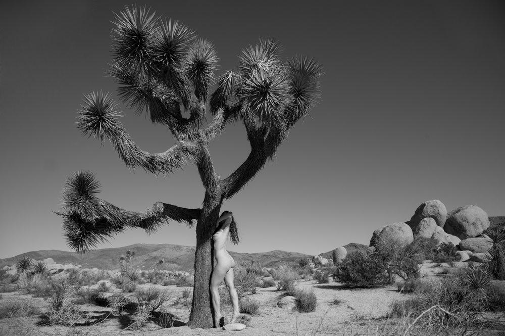 Natural Coexistence - Joshua Tree