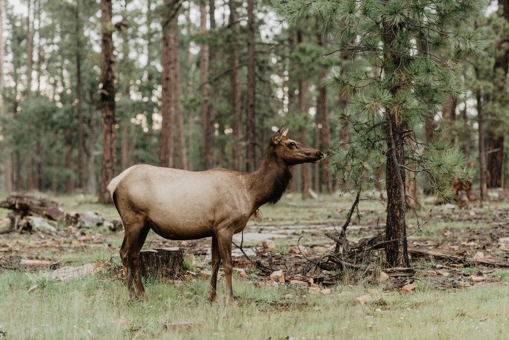 Wild Elopements - Adventure Elopements - Arizona Elopement