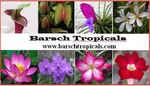 - Barsch's TropicalsThey purchase young plants from wholesale growers in the US and around the world.  Barsch's Tropicals propagates plants from seed, cuttings, and divisions, and hybridize new cultivars.They specialize in orchids ,bromeliads, lotus, adenium and carnivorous plants. Contact Hours: M-F 9:00am- 5:00pm PSTbarschtropicals@gmail.com(916) 542-3422
