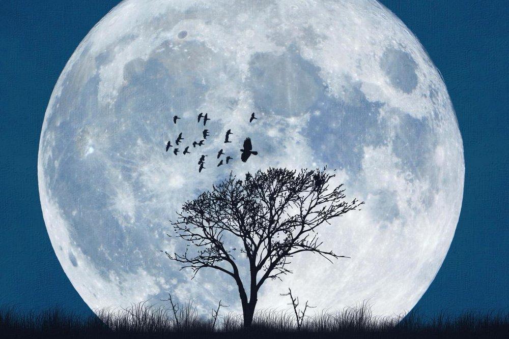 Full Moon and Tree and Birds.jpg