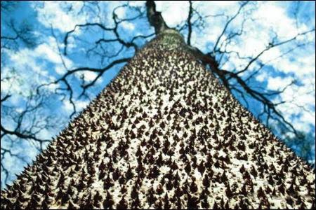 Tree Spikes.jpg