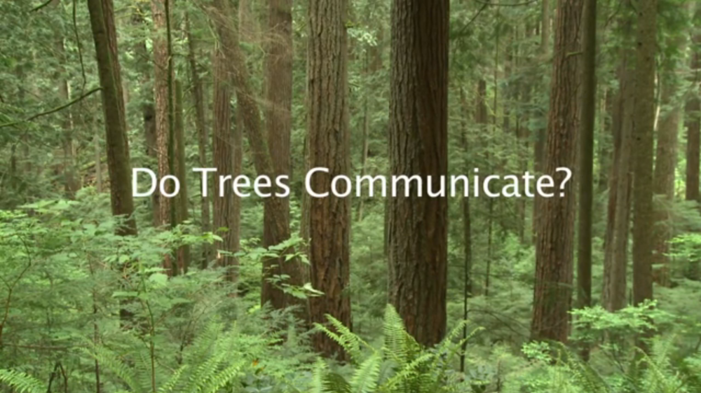 Communicating Trees.jpg