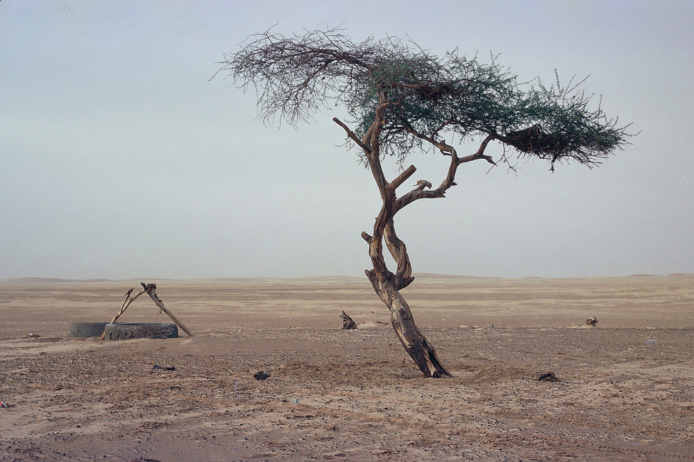 THE WORLD'S LONELIEST TREE