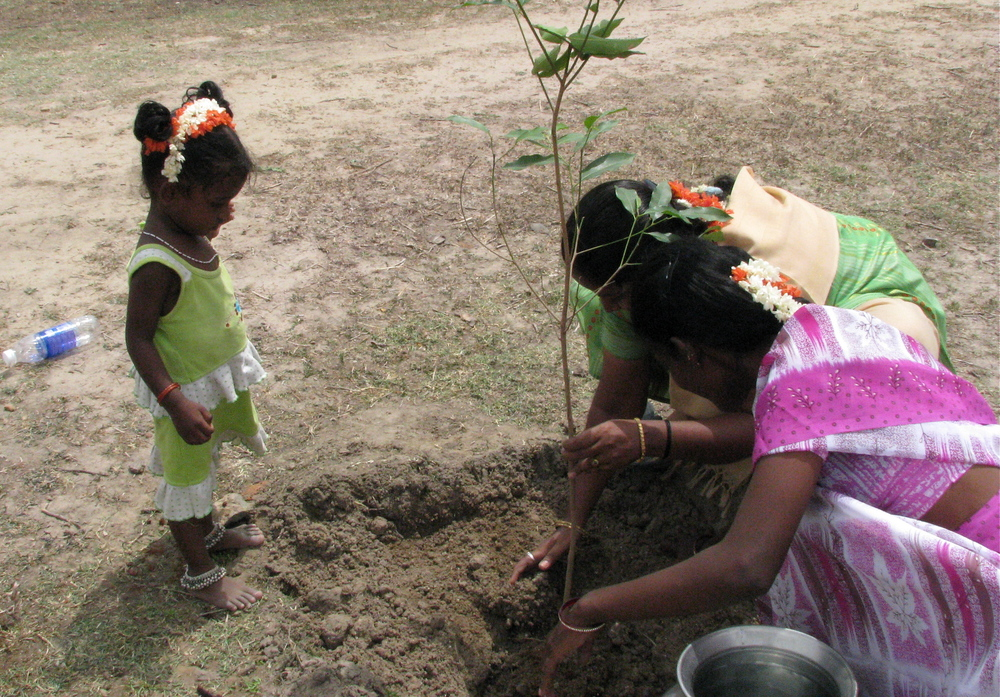 2 BILLION TREE PLANTING PROJECT IN INDIA (ARTICLE)