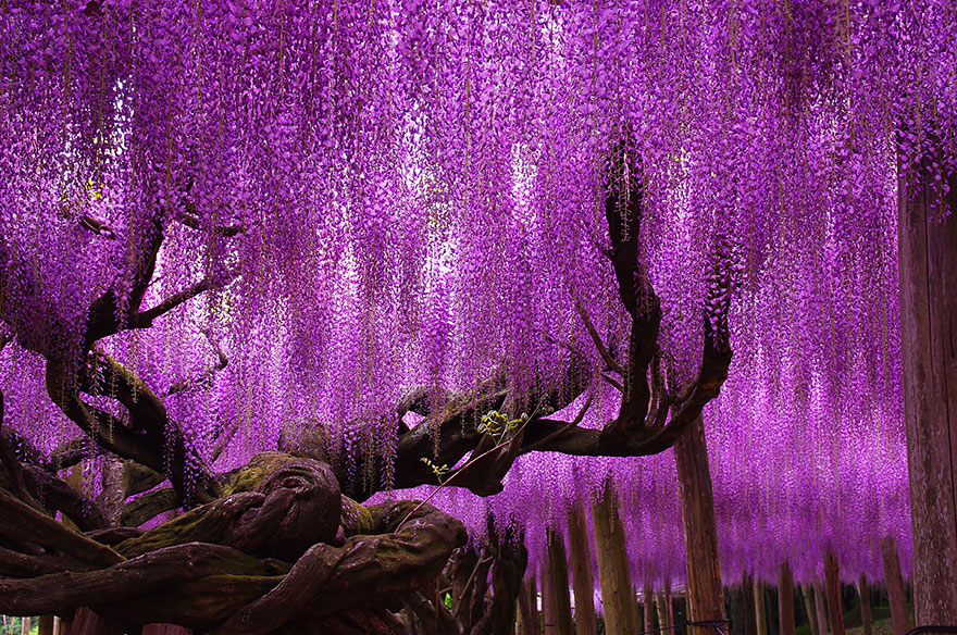 16 Most Beautiful Trees in the World
