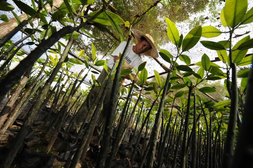 WORLD TREE-PLANTING RECORD BROKEN (article)