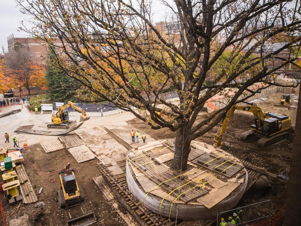 UNIVERSITY OF MICHIGAN SPENDS $400K TO MOVE OLD TREE (audio)