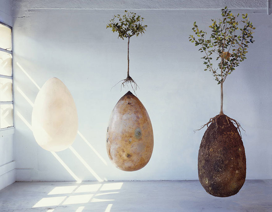 BURIAL PODS THAT TURN YOU INTO A TREE (photo essay)