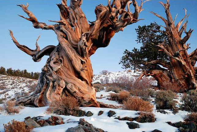 10 MOST REMARKABLE TREES (photos)
