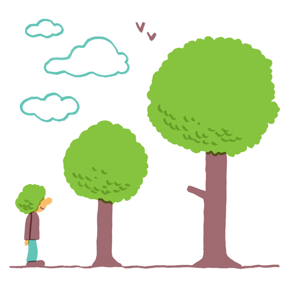 WHAT A TREE IS WORTH (essay)