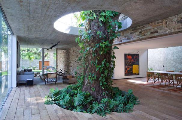 BUILDING AROUND TREES (photos)