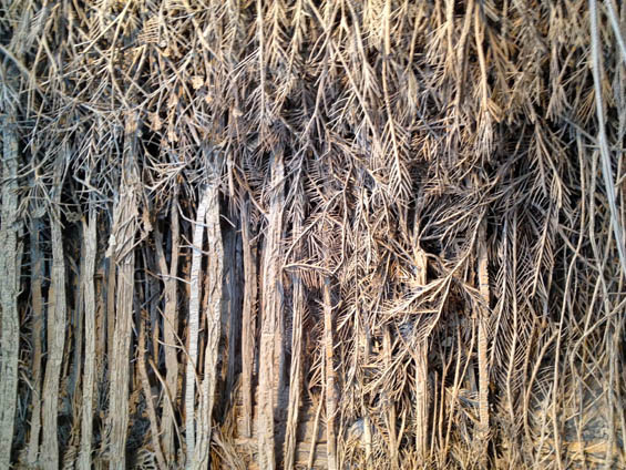 DENSE CARDBOARD FORESTS (photos)