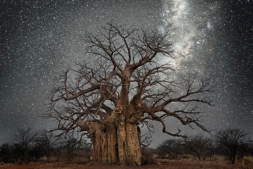 OLDEST TREES BY STARLIGHT (photo essay)