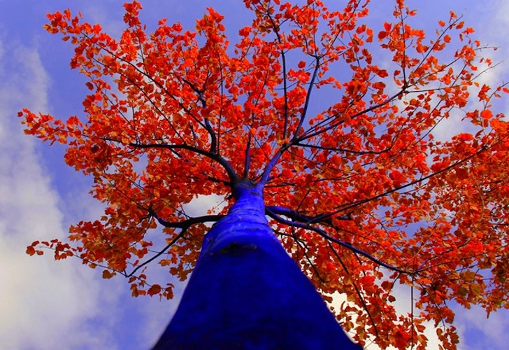 THE BLUE TREES (video)