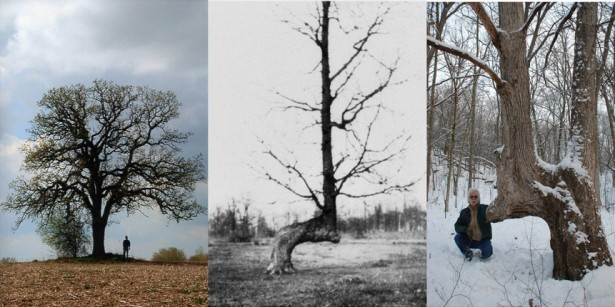 PRESERVING INDIAN MARKER TREES (article)