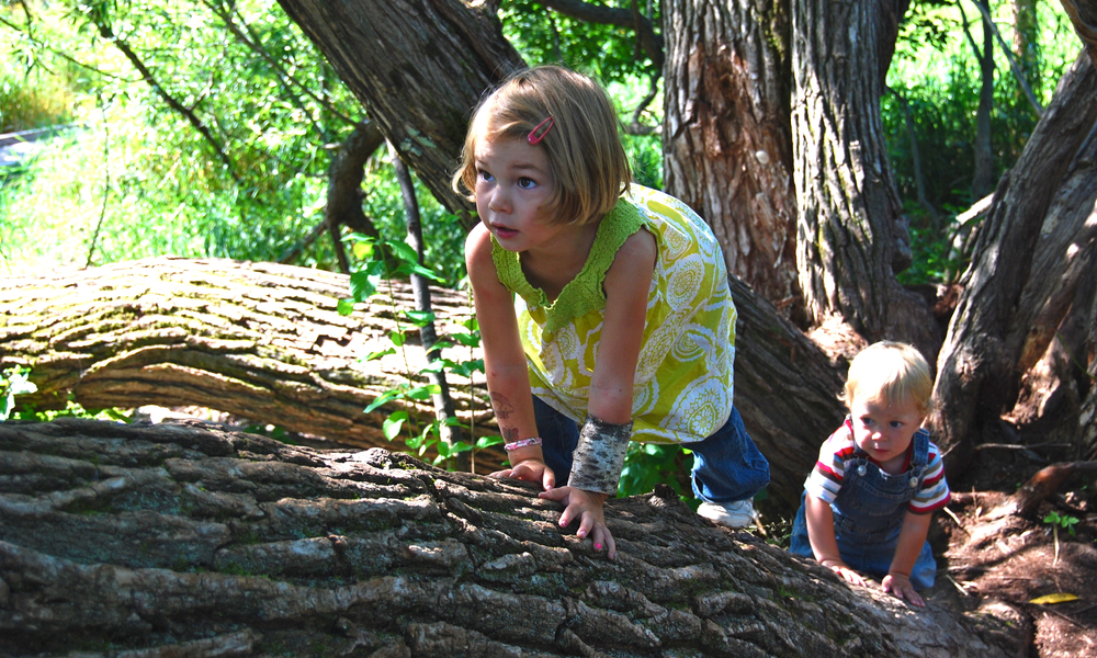 TREES ENHANCE CHILDREN'S BRAINS (article)
