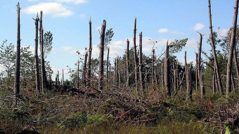 HOW WIND BREAKS TREES (short article)