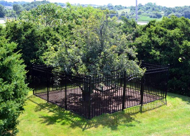 US FRUIT TREE PLANTED BY EUROPEAN SETTLERS (article)