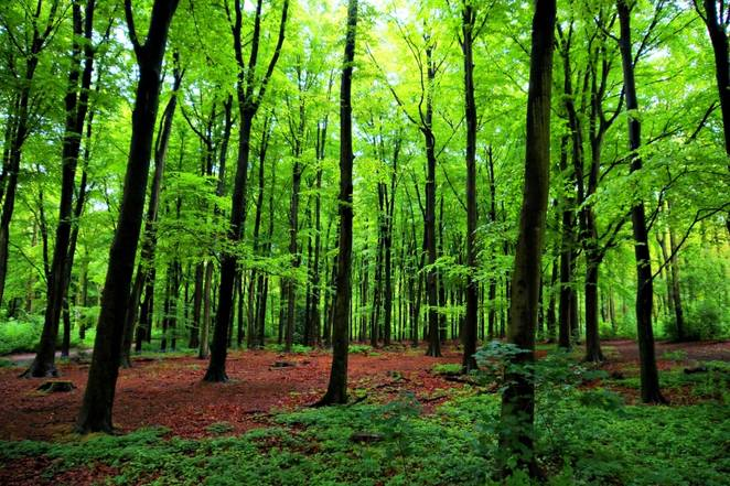 HOW TREES TALK TO EACH OTHER (video)