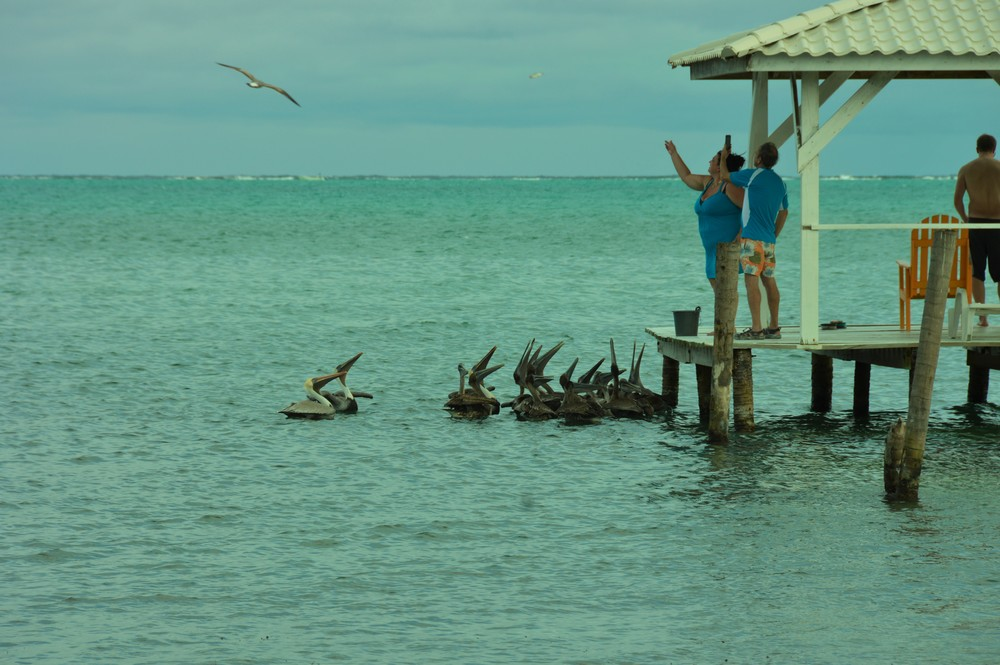 tourists feeding the pelicans