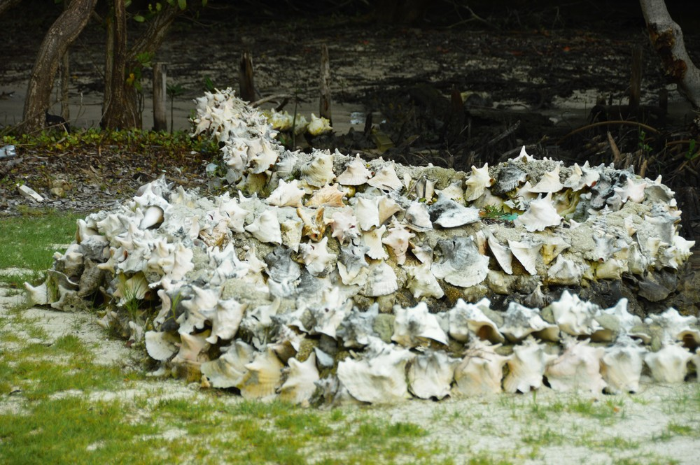 conch shell fence