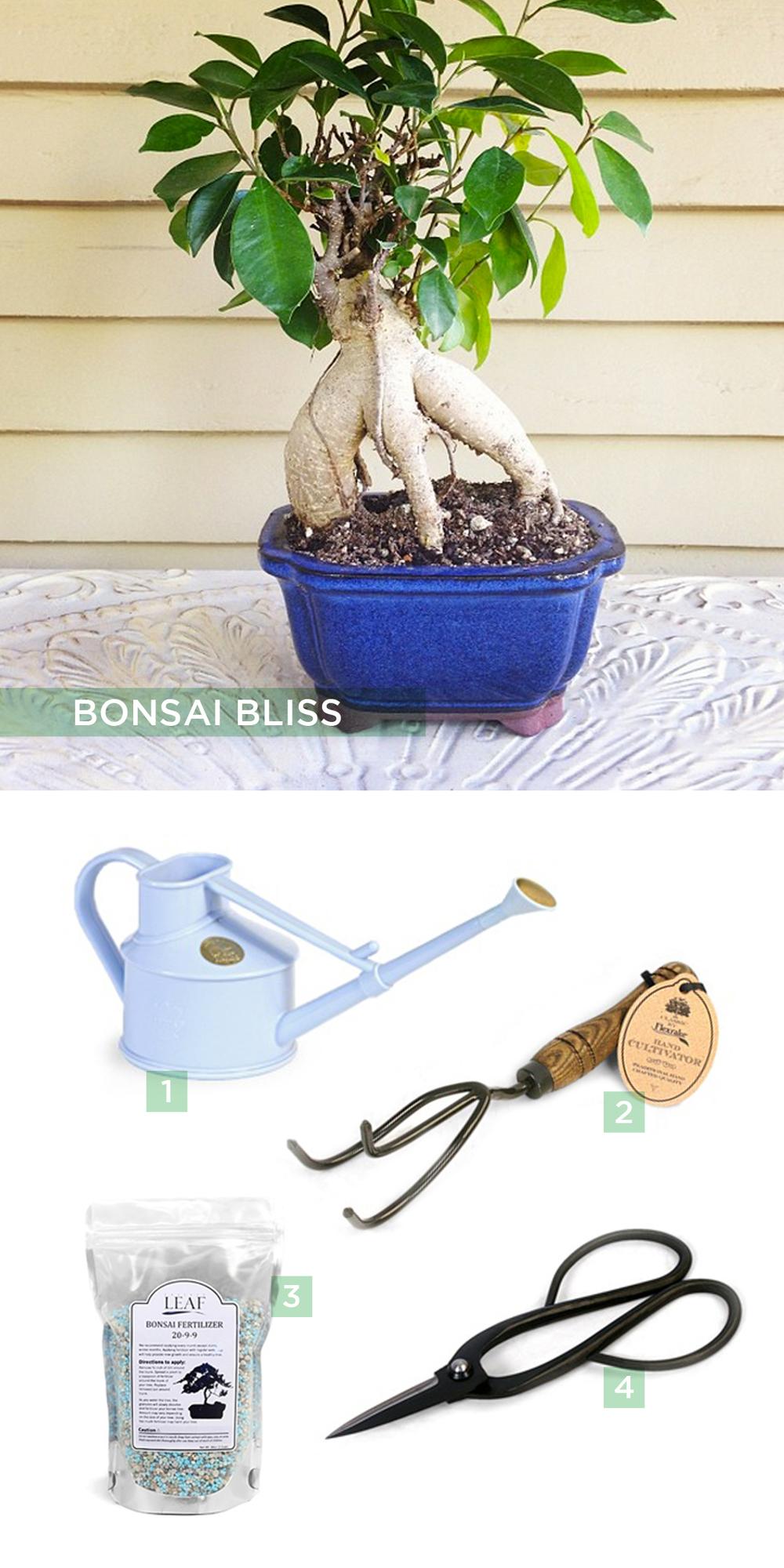 Bonsai-Bliss.jpg