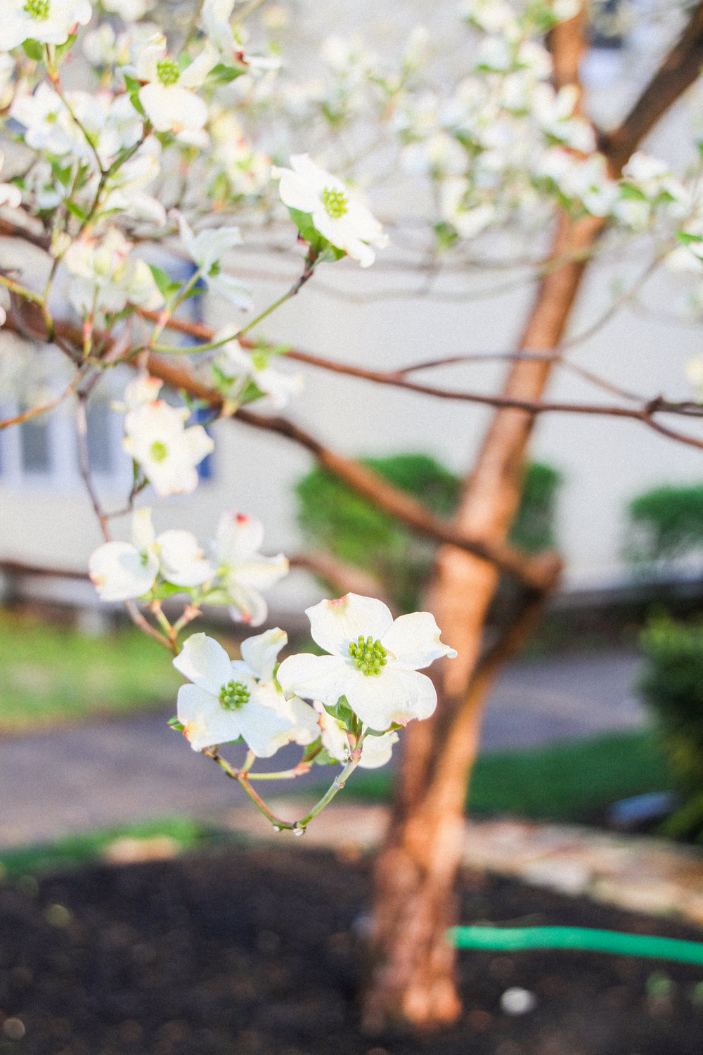 Letters Are Lovely  | Dogwood in Bloom