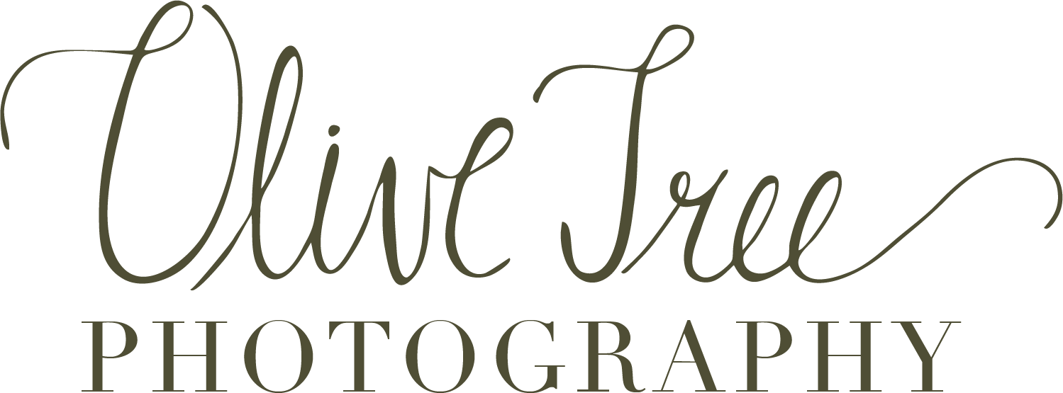 Olive Tree Photography