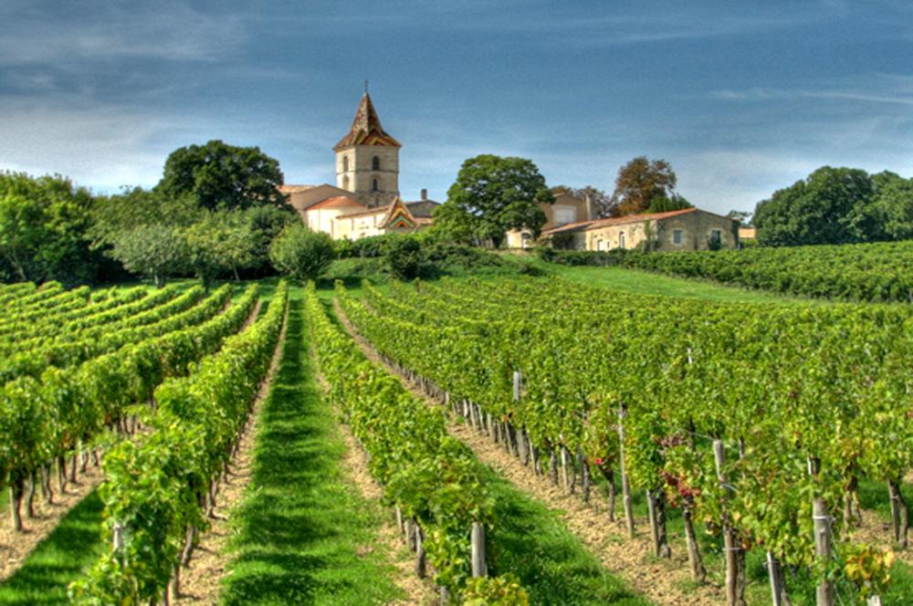 Bordeaux-vineyards.jpg