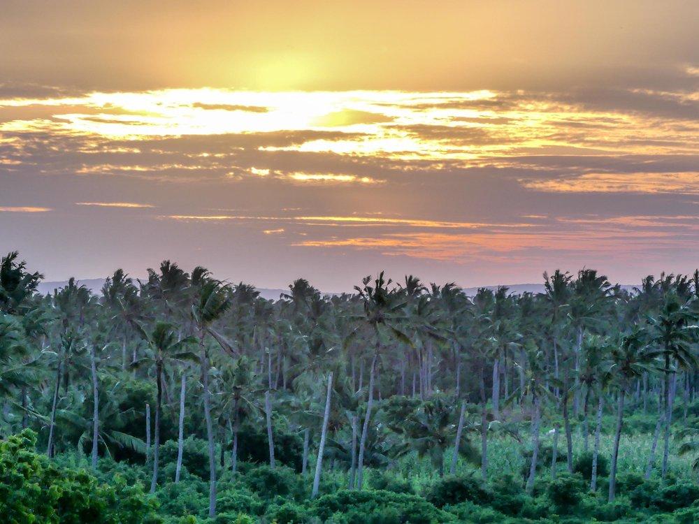 coconut plantation at the back.jpg