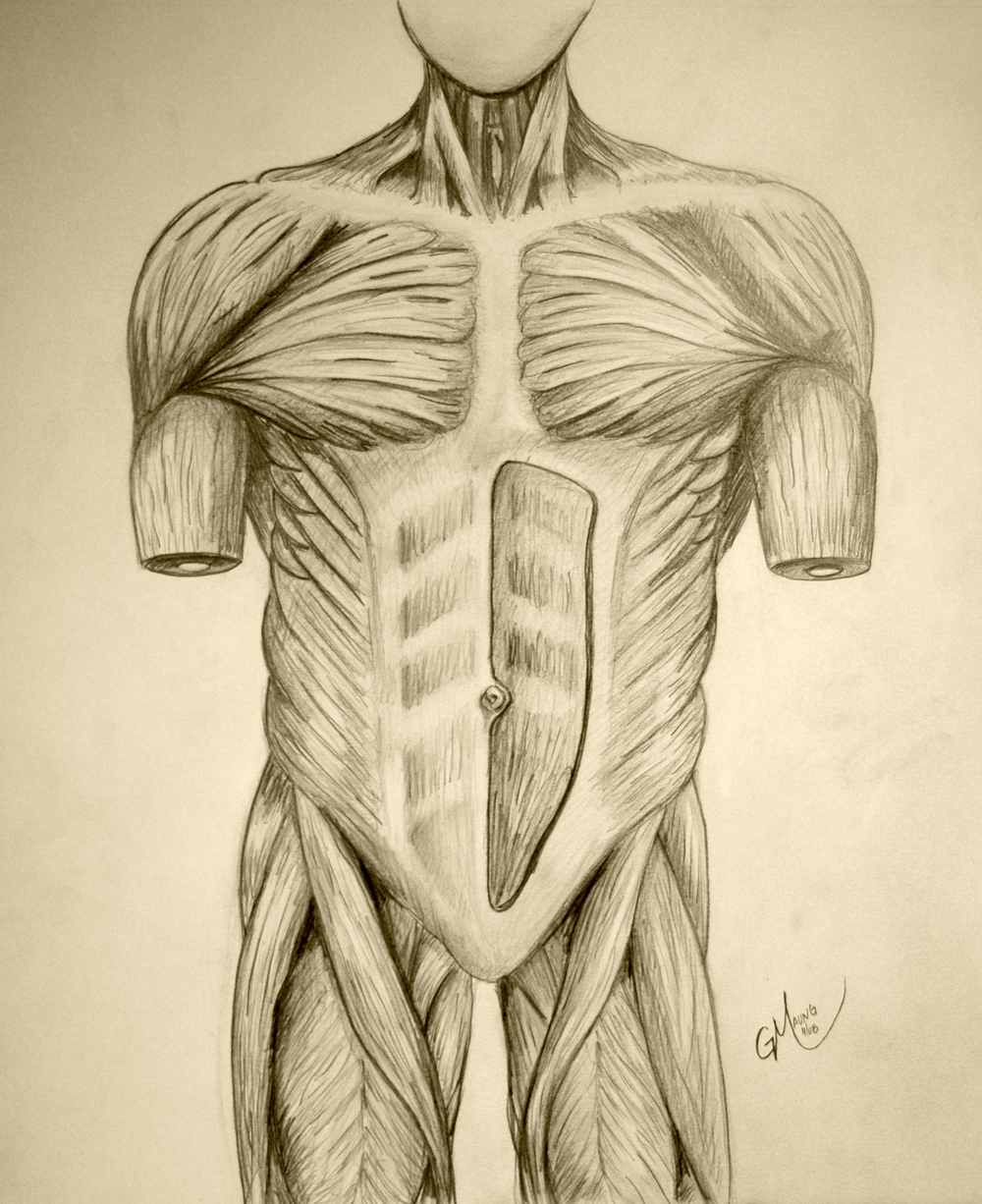 torso_muscles_big.jpg