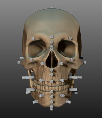 Yorick Skull w/ Facial Markers