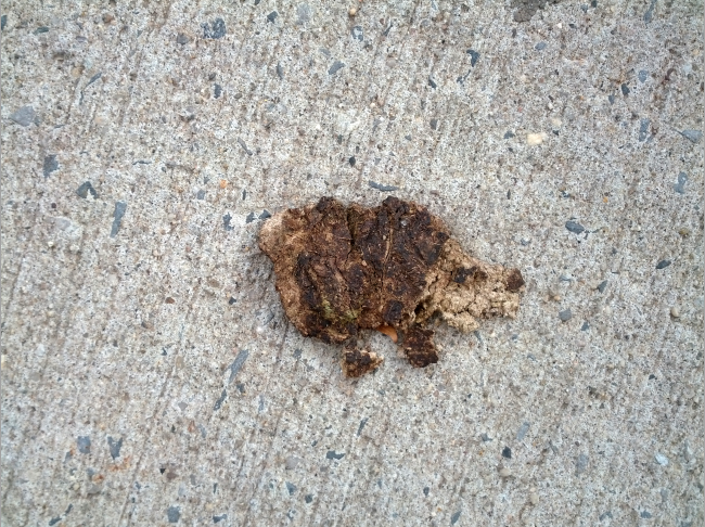 Where the dog poop on the sidewalk looks like something…