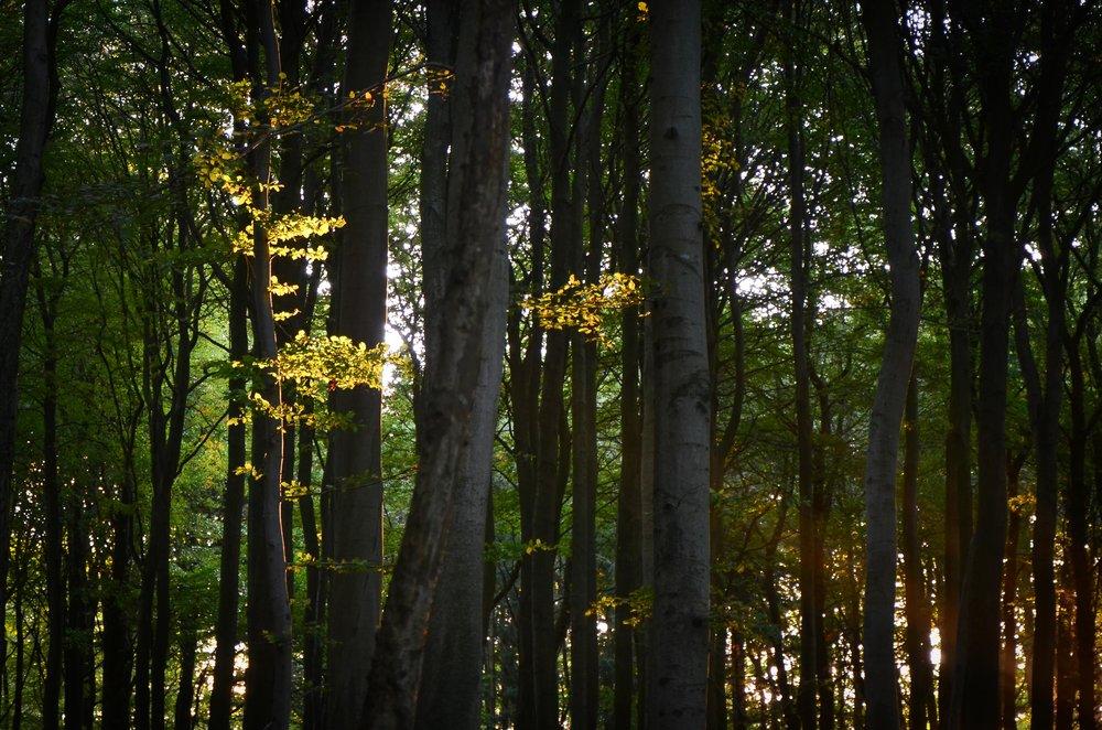 Bergwaldprojekt_Sassnitz_Ruegen_Moor_150dpi_20171014_Credits_CC-BY-SA_Jenni_Ottilie_Keppler-16.jpg