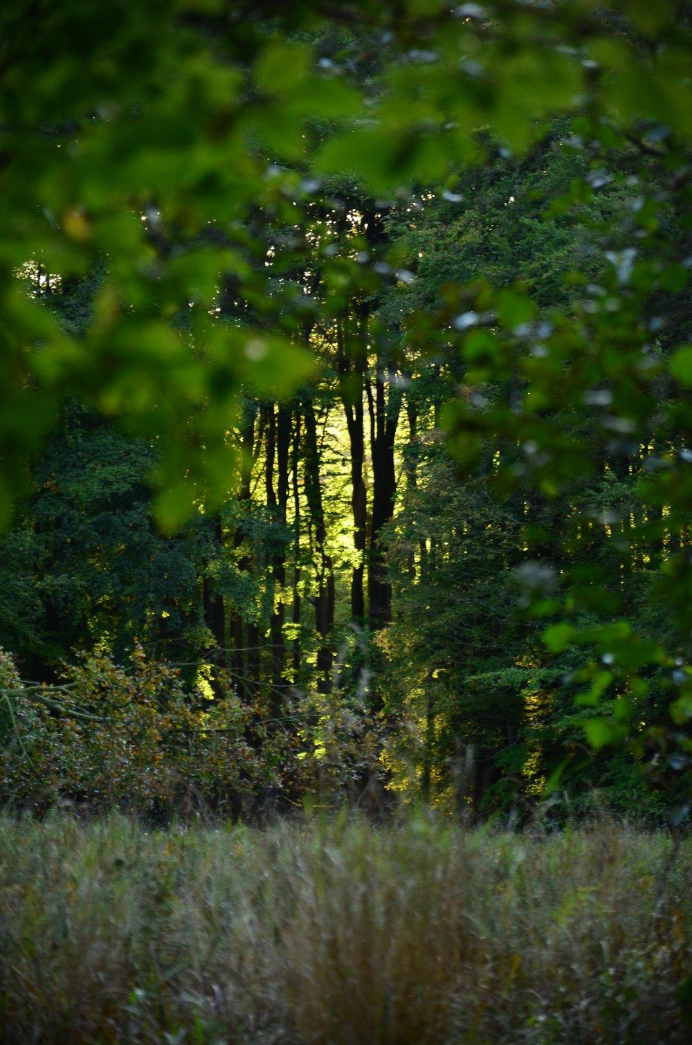 Bergwaldprojekt_Sassnitz_Ruegen_Moor_150dpi_20171014_Credits_CC-BY-SA_Jenni_Ottilie_Keppler-73.jpg