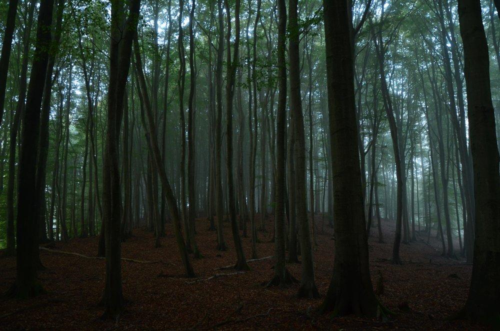 Bergwaldprojekt_Sassnitz_Ruegen_Moor_150dpi_20171014_Credits_CC-BY-SA_Jenni_Ottilie_Keppler-116 (1).jpg
