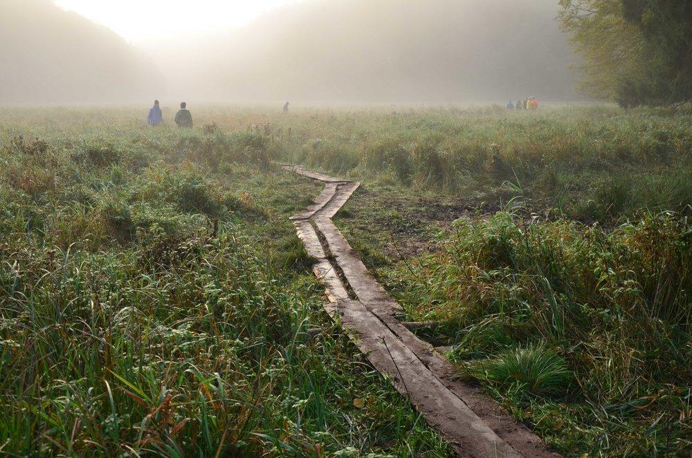 Bergwaldprojekt_Sassnitz_Ruegen_Moor_150dpi_20171014_Credits_CC-BY-SA_Jenni_Ottilie_Keppler-132.jpg