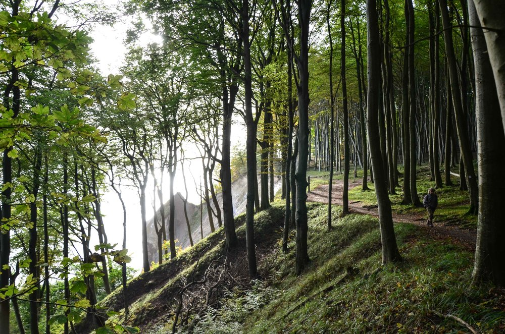 Bergwaldprojekt_Sassnitz_Ruegen_Moor_150dpi_20171014_Credits_CC-BY-SA_Jenni_Ottilie_Keppler-279.jpg