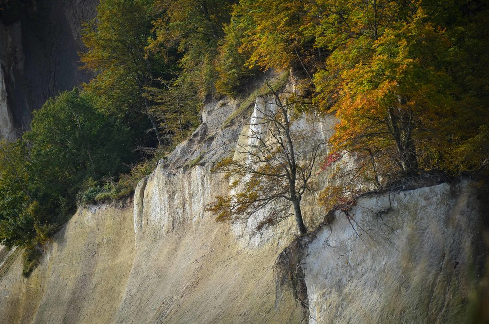 Bergwaldprojekt_Sassnitz_Ruegen_Moor_150dpi_20171014_Credits_CC-BY-SA_Jenni_Ottilie_Keppler-293.jpg