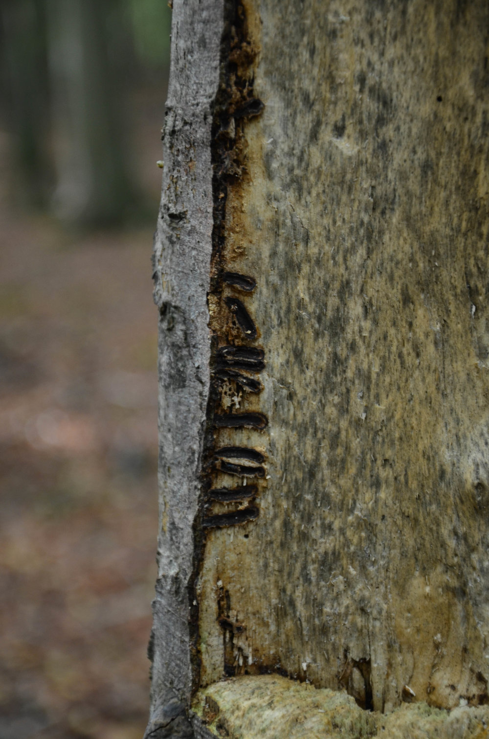 Bergwaldprojekt_Sassnitz_Ruegen_Moor_150dpi_20171014_Credits_CC-BY-SA_Jenni_Ottilie_Keppler-310.jpg