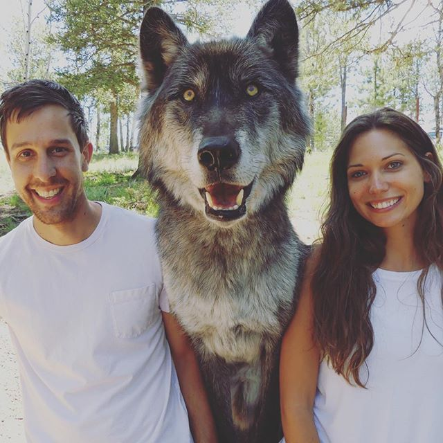 Alpha male, alpha female... and me. 🐺👀#natureismetal . . If you're in #co go check out the Colorado Wolf and Wildlife Center, and if you're lucky you can hang with this massive Timber Wolf #Keyni . . #timberwolf #colorado #overland #coloradowolfandwildlifecenter #getoutside #goexploring #nibbles #snacks #doggo #surreal