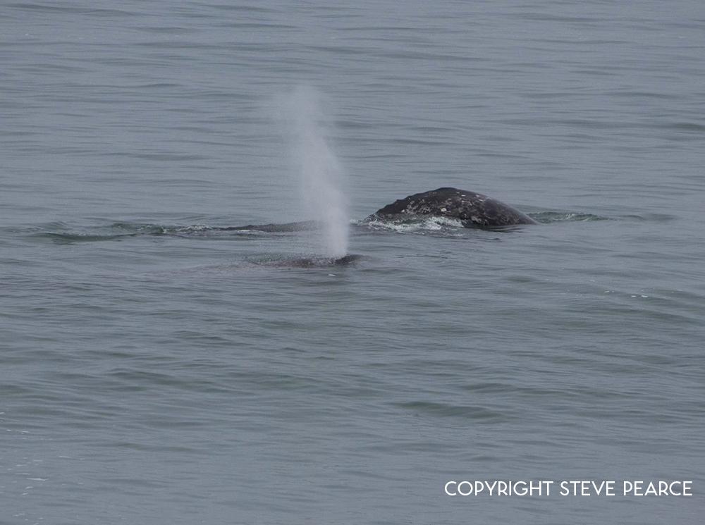 whale6.jpg