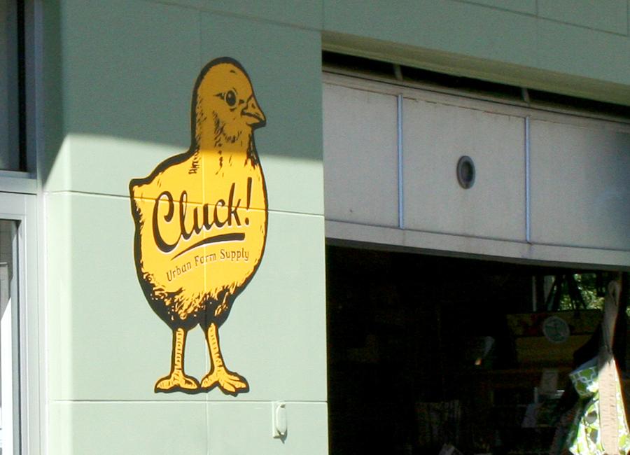 clucky3_webready.jpg