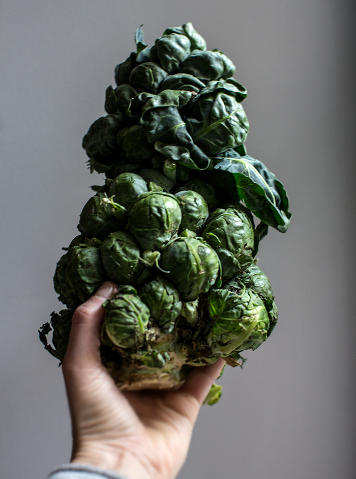 deviled brussel sprout salad | what's cooking good looking