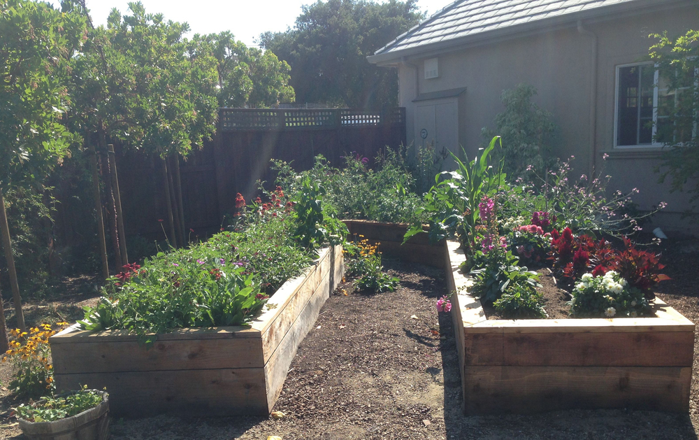 Raised beds.jpg